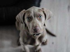 Karma dla psiej mamy - jaka powinna być?