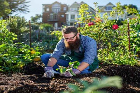 Jak wybrać firmę do zakładania ogrodów?